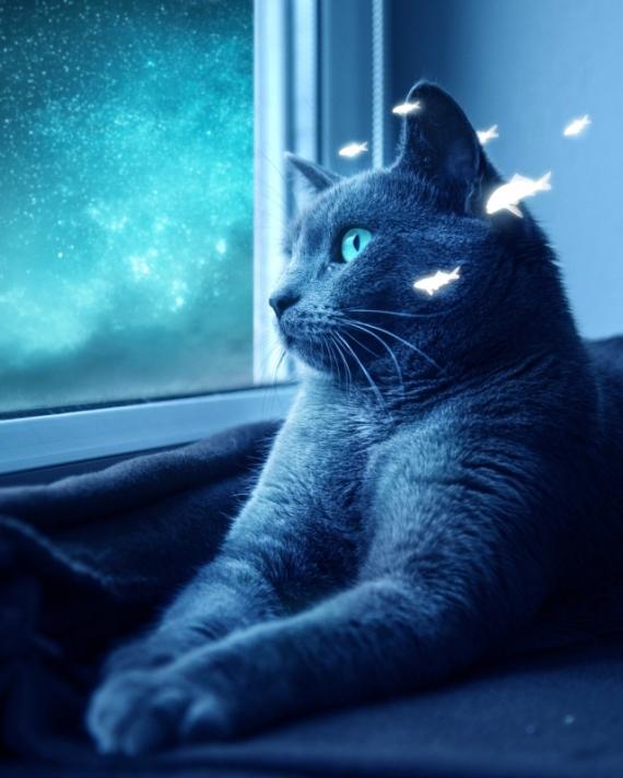 Постер (плакат) Голубая кошка