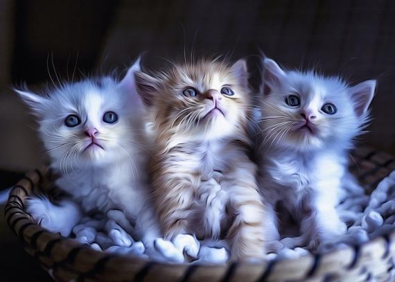 Постер на подрамнике Три котёнка