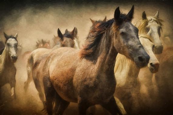 Постер (плакат) Табун лошадей