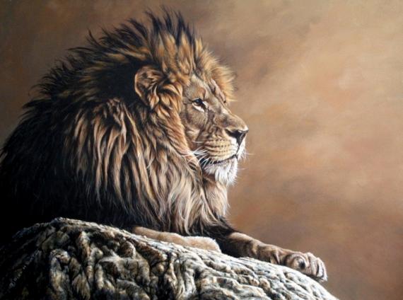 Постер на подрамнике Царь зверей на отдыхе
