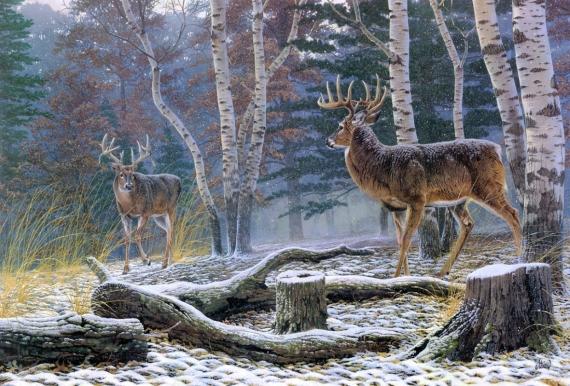 Постер на подрамнике Два лесных оленя