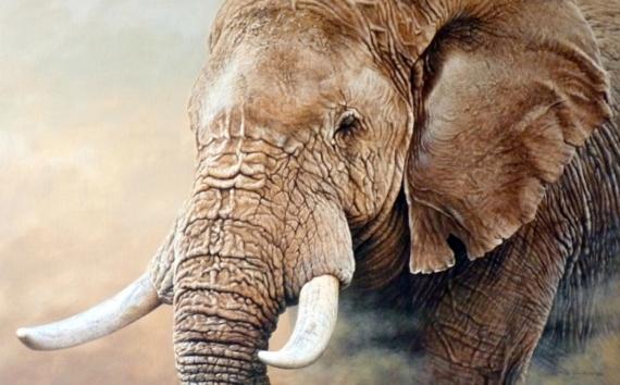 Постер на подрамнике Слон