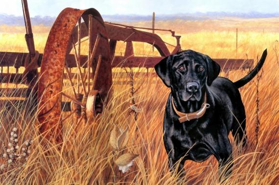 Постер (плакат) Охотничий пёс