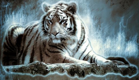 Постер (плакат) Тигр отдыхает