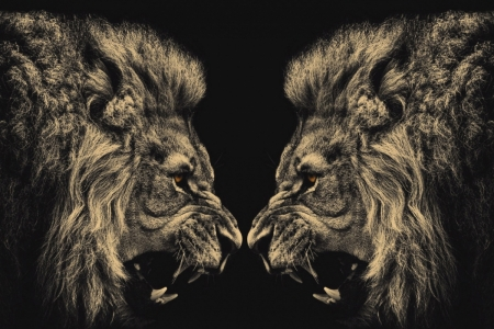 Постер (плакат) Схватка львов