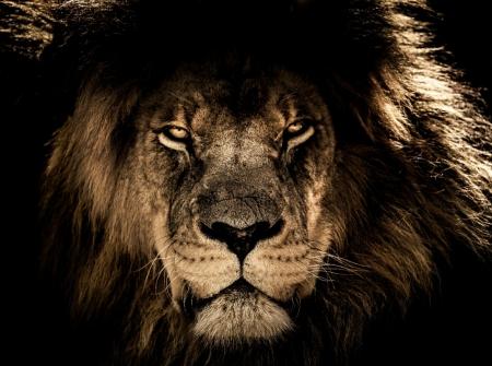 Постер (плакат) Царь зверей