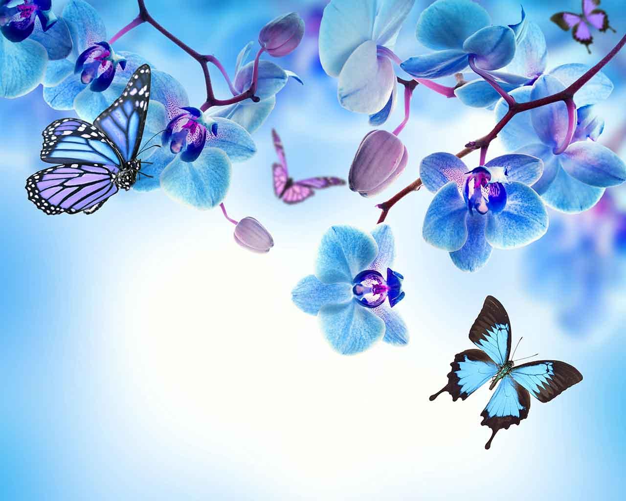 Постер на подрамнике Бабочки и голубые орхидеи