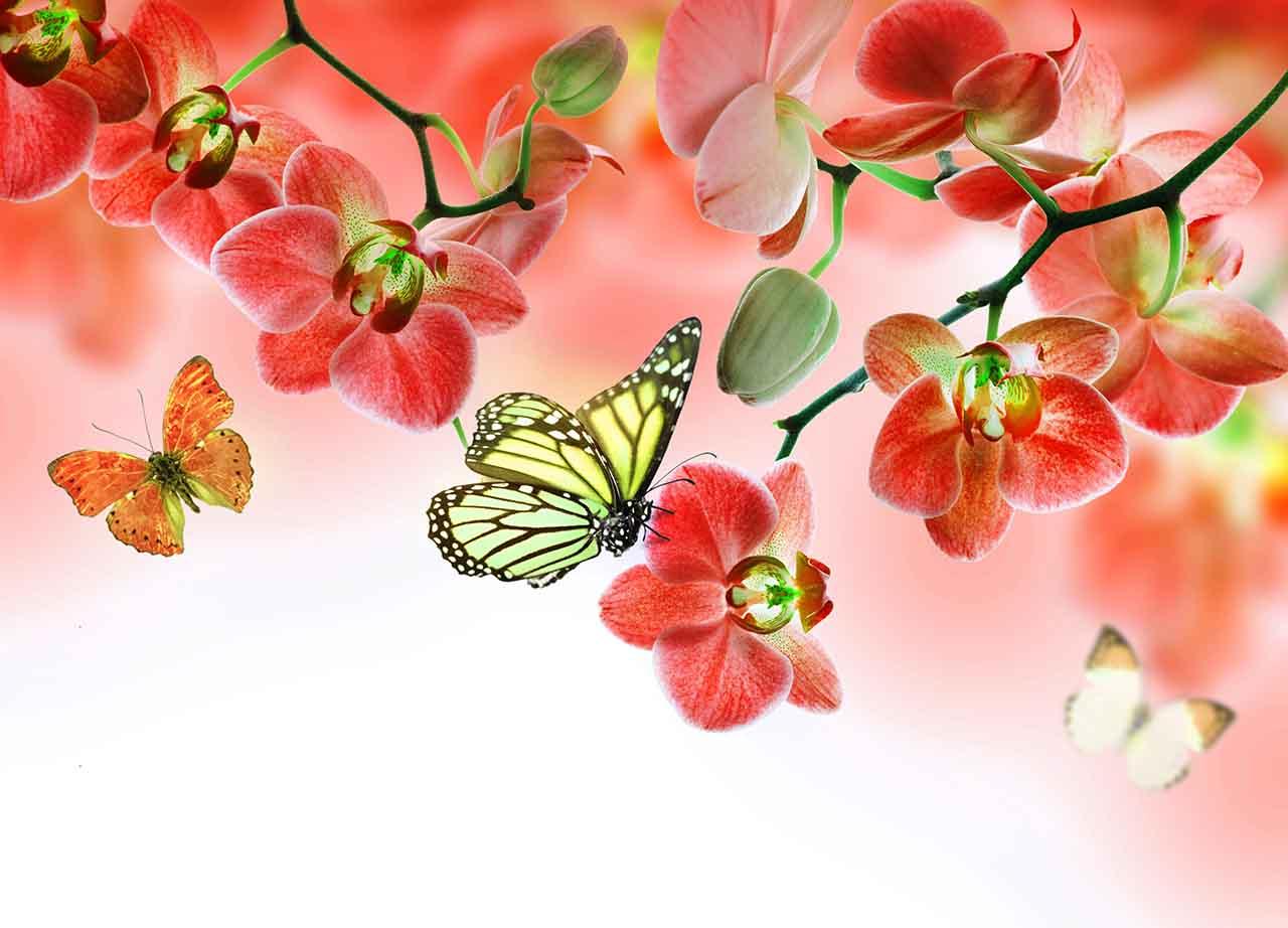 Постер на подрамнике Бабочки и красные орхидеи