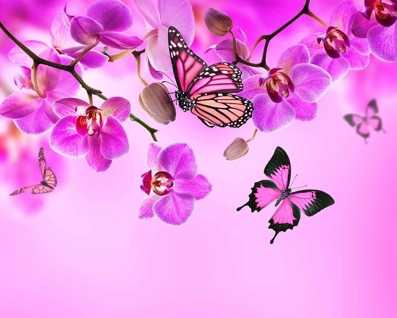 Плакат Розовые орхидеи и бабочки