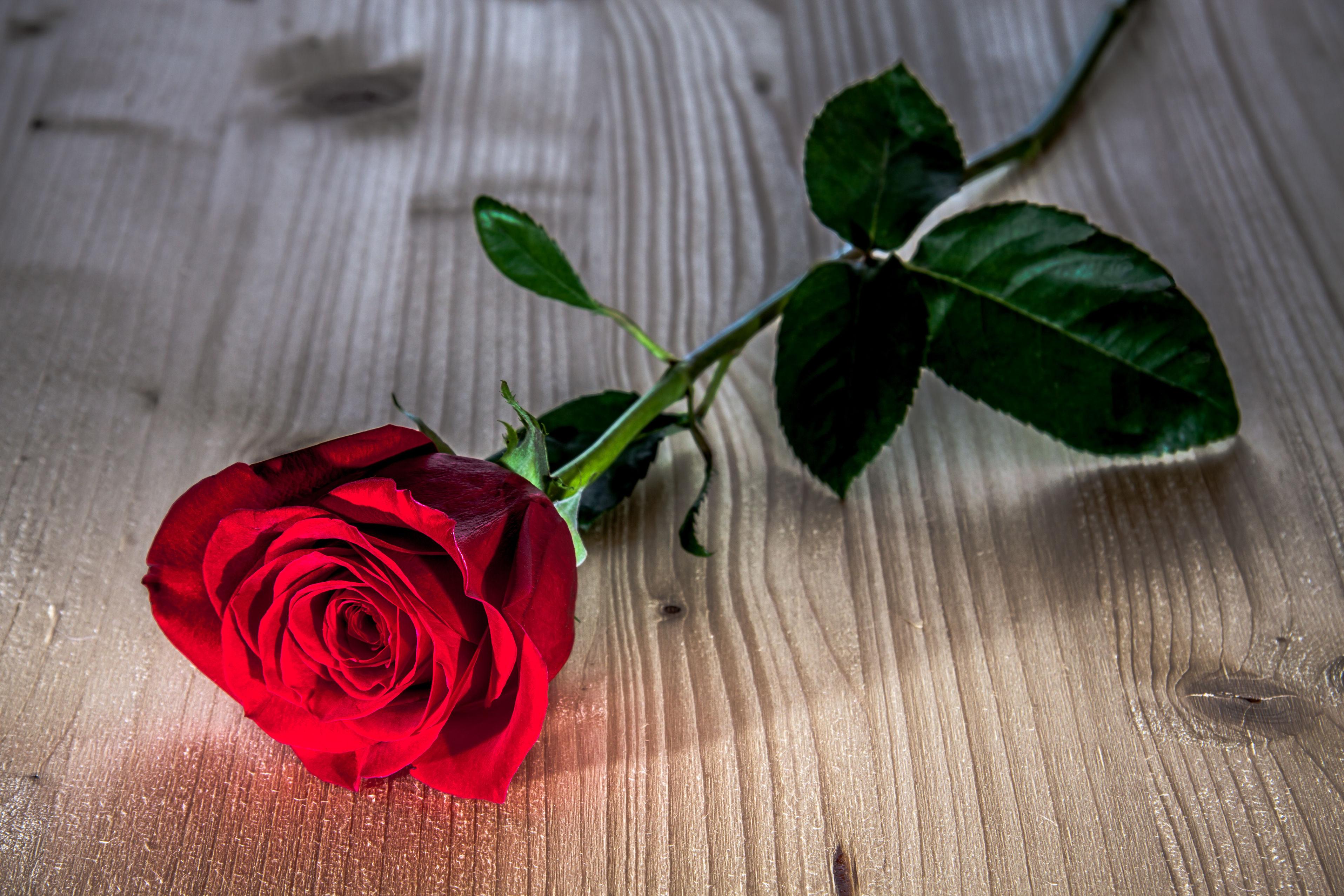 Плакат Одна роза