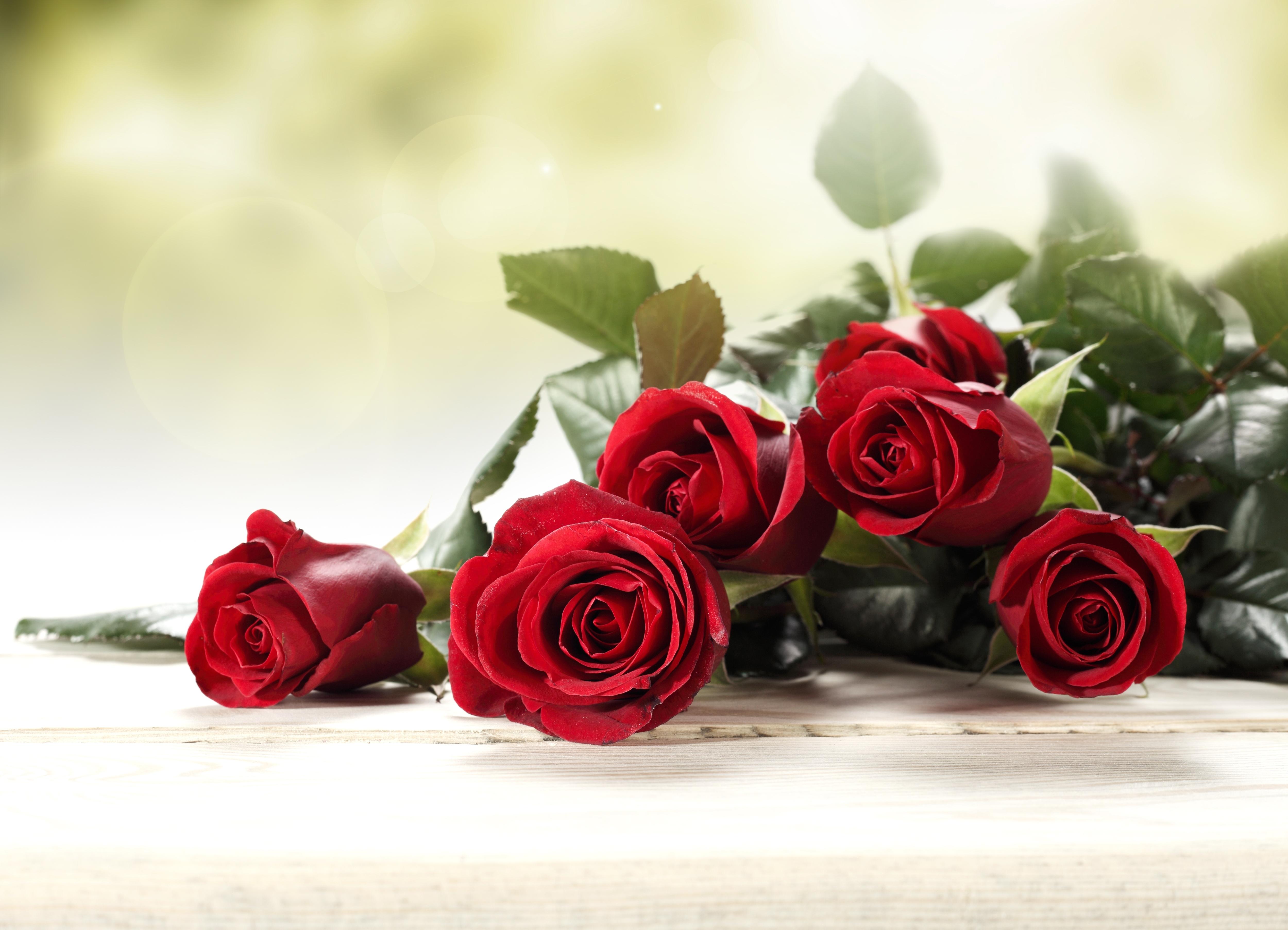 Постер на подрамнике Красные розы