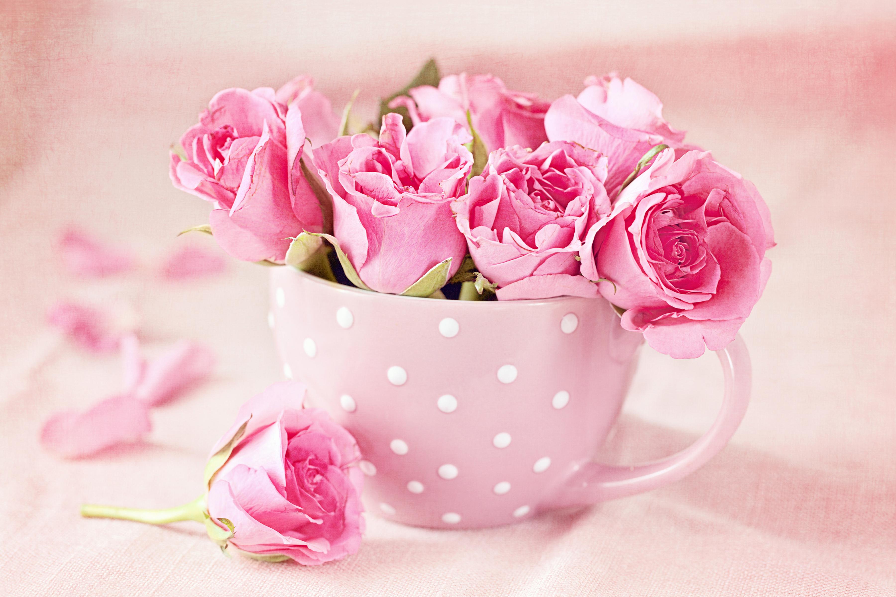 Плакат Маленькие розы в чашке
