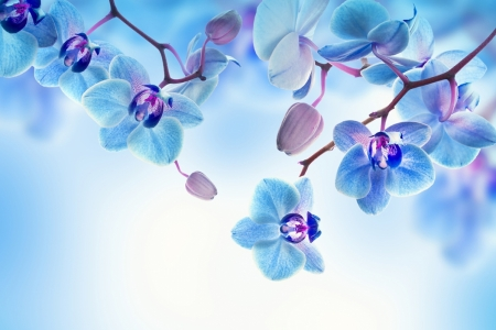 Плакат Голубые орхидеи