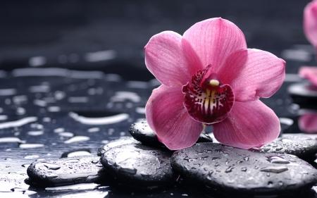 Плакат Розовая орхидея на черных камнях