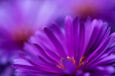 Постер на подрамнике Фиолетовый цветок