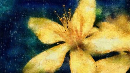 Постер на подрамнике Желтая лилия