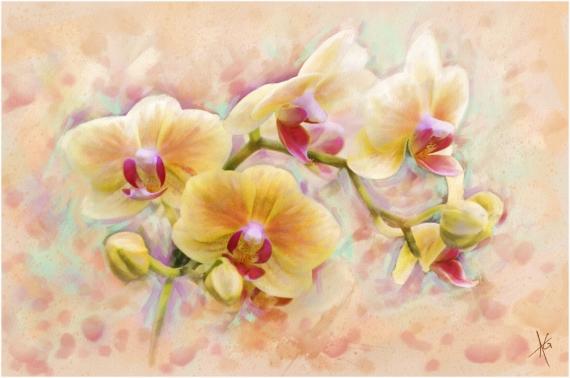 Постер на подрамнике Орхидеи
