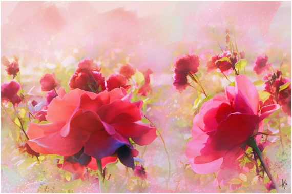 Постер на подрамнике Розовые цветы