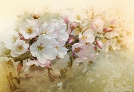 Постер на подрамнике Вишня в цвету