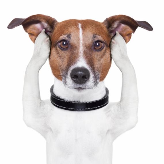 Постер (плакат) Собака закрывает уши