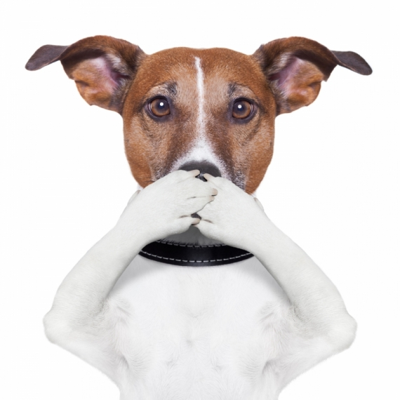 Постер на подрамнике Собака закрывает рот