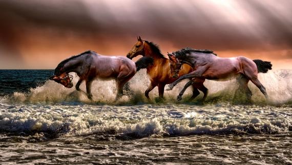 Постер (плакат) Купание лошадей