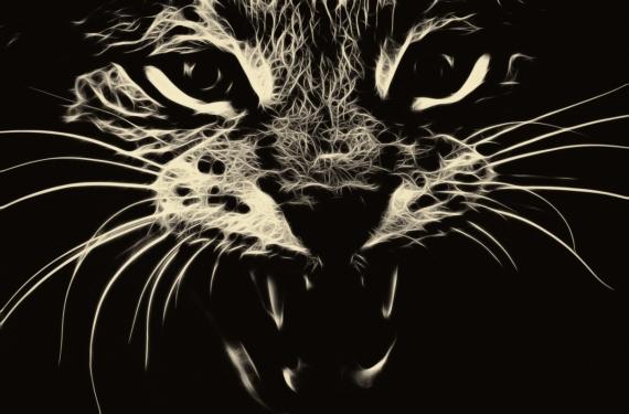 Постер на подрамнике Кошка злится