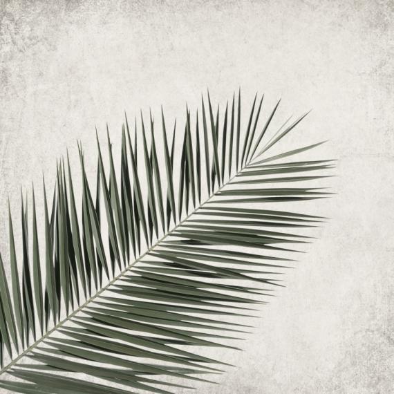 Плакат Ветка пальмы