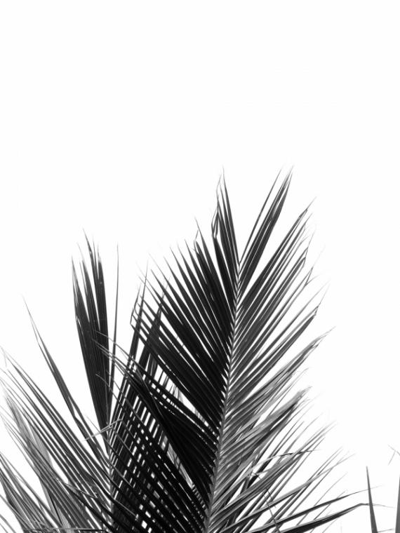Постер на подрамнике Пальмовые ветки