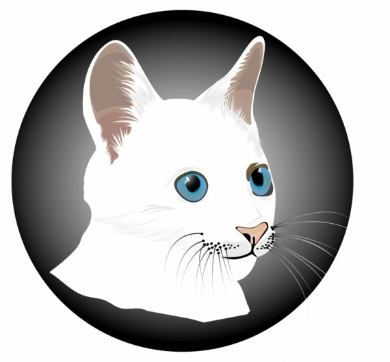 Постер (плакат) Белый кот