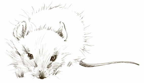Постер (плакат) Белая мышка