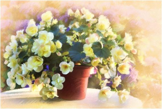Постер (плакат) Горшочек с цветами
