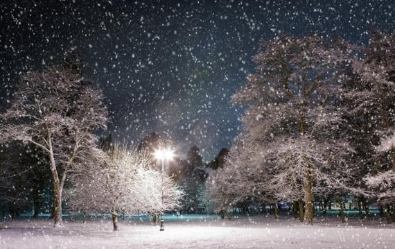 Постер на подрамнике Ночь в зимнем парке