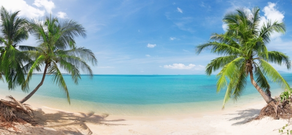 Постер на подрамнике Пальмы у воды