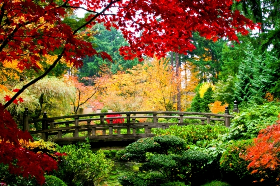 Постер на подрамнике Осенний парк