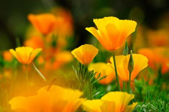 Постер на подрамнике Жёлтые цветы