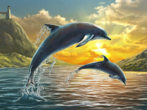 Постер (плакат) Дельфины на закате