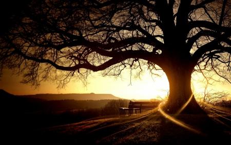 Постер на подрамнике Скамейка под деревом