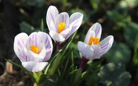 Постер на подрамнике Весна
