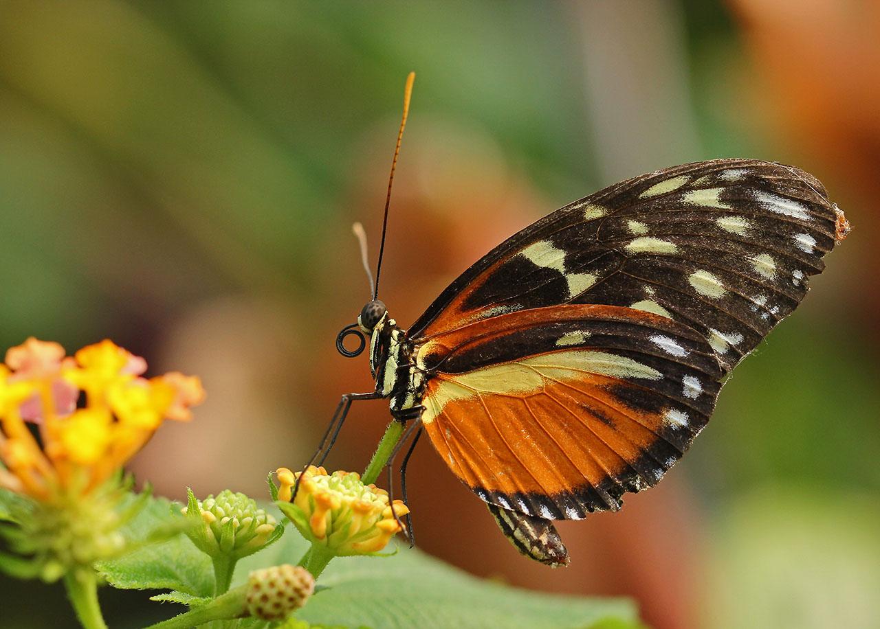 Постер на подрамнике Бабочка на листочке