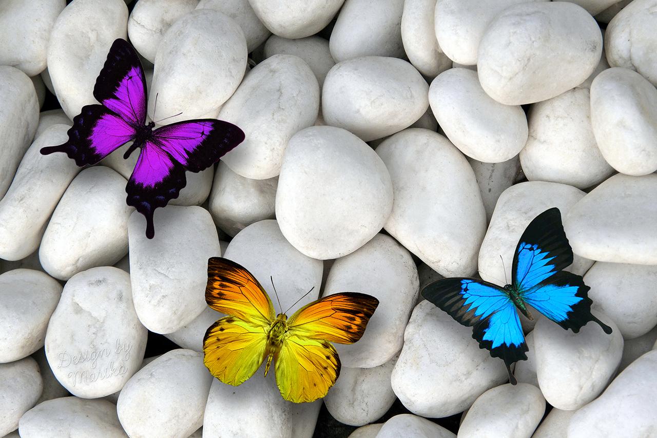 Постер на подрамнике Разноцветные бабочки на камнях