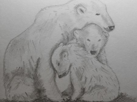 Постер (плакат) Белые медведи карандашом