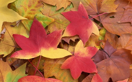 Постер на подрамнике Осень