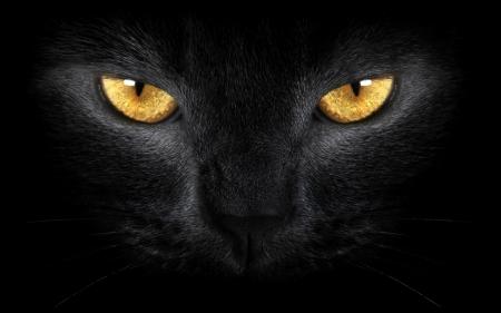 Постер (плакат) Взгляд черного кота