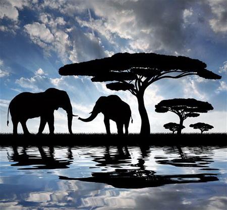 Плакат Африка
