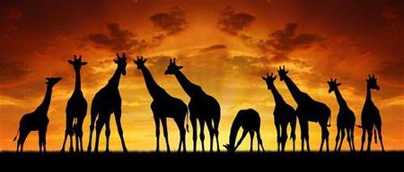 Постер (плакат) Африка