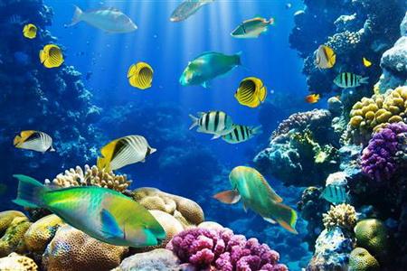 Постер на подрамнике tropical fish - тропические рыбки