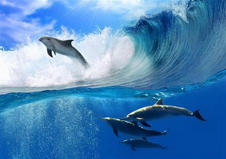 Постер на подрамнике delfines - дельфины