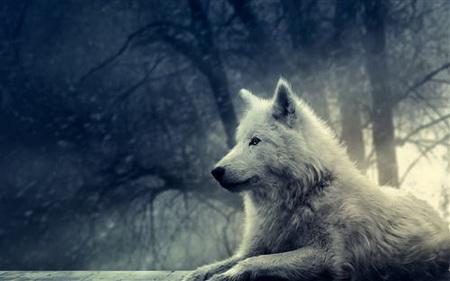 Постер на подрамнике wolf - волк