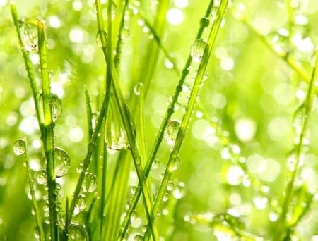 Постер на подрамнике Капельки росы на траве